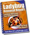 Ladybugbook